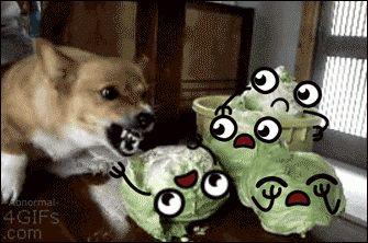 El perro que odia a las lechugas