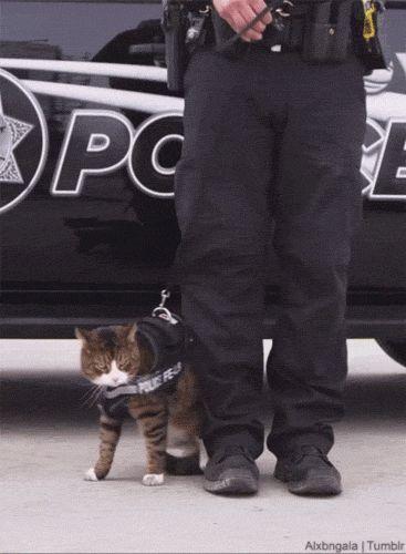 Porque no hay gatos policias