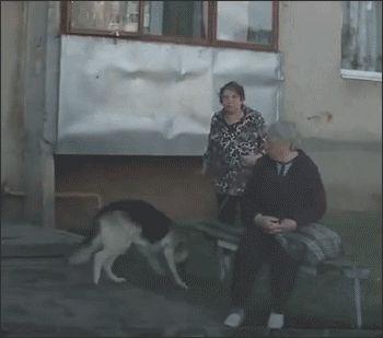 Desventajas de tener un perro