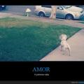 El amor a primera vista existe