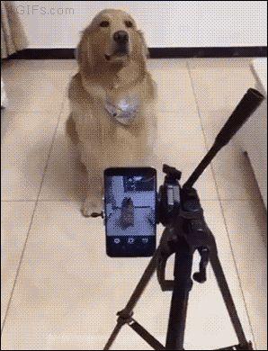 El perro mas fotogenico del mundo