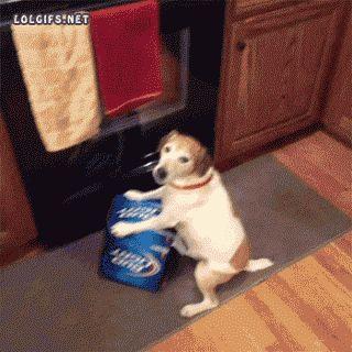 El perro que amaba la cerveza