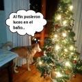 Es navidad y tu perro lo sabe