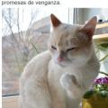 La mejor foto de un gato que veras