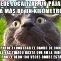 Los gatos son especiales