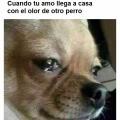 Los perros tambien lloran