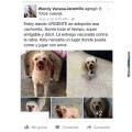 Razones para adoptar a un perrito