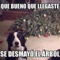 Cosas que suceden entre el arbol de navidad y tu perro