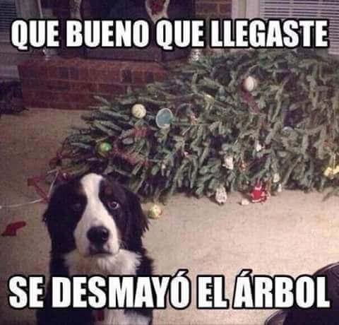 Resultado de imagen para perro comiendo arbol de navidad