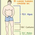 En que se divide el cuerpo humano