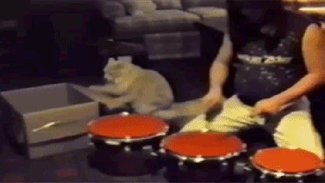 El gato baterista