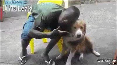 El perrito que era racista