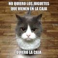 Logica felina