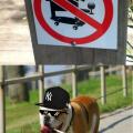Prohibido perros que fumen y beban