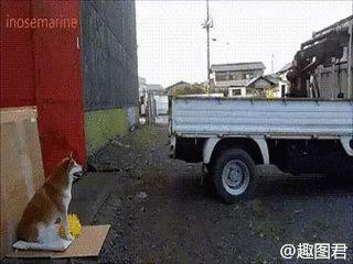 El perrito que se ganaba su alimento a punta de trabajo