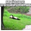 Es muy bueno ser un panda