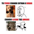 Tu perro dependiendo de quien entra