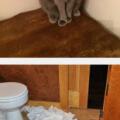 El camuflaje perfecto de los gatos