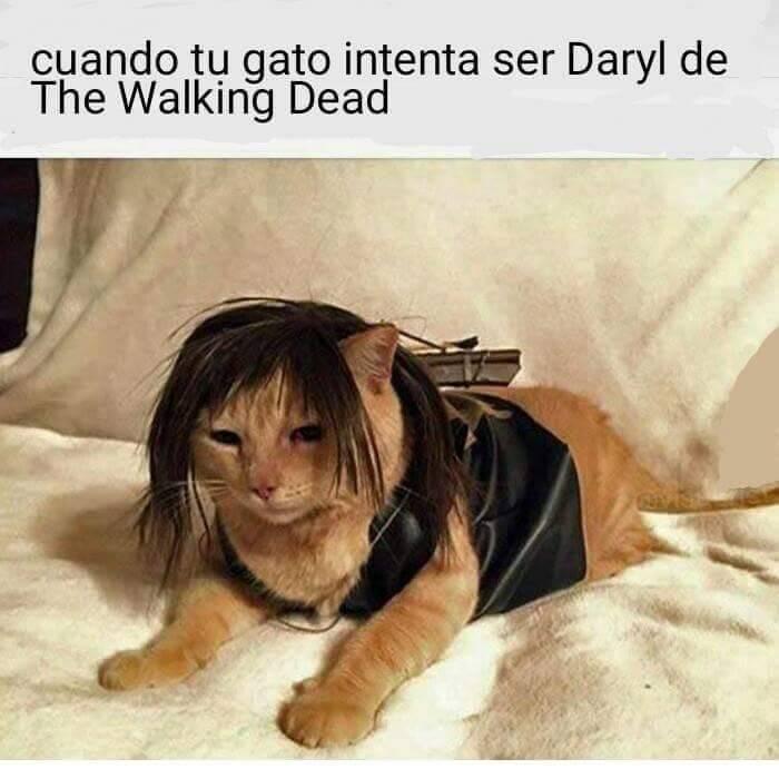 El gato que se cree Daryl
