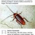 Homofobica a las cucarachas