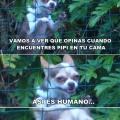 La venganza de tu perro