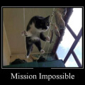 Mission imposible nivel gato