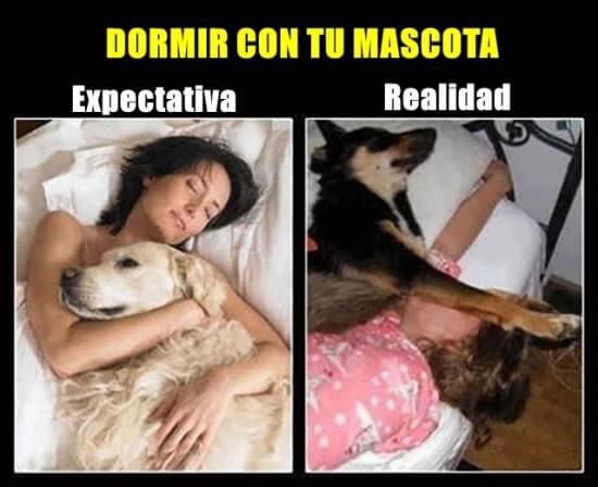 No es tan lindo dormir con tu mascota