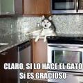 Si lo hace el gato es gracioso