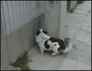 Un perro muy astuto