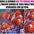 jamas volvere a ver buscando a Nemo con los mismos ojos