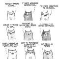 Confesiones de un gatito