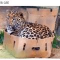 Gato es gato