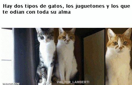 Hay dos tipos de gatos