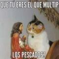 Los gatos adoran a Jesus