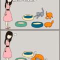 Los gatos nunca seguiran lo establecido