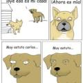 Los perros son muy astutos