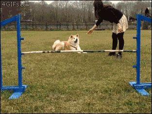 No es facil entrenar a un perro