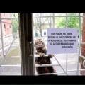Razones para no dejar entrar al gato