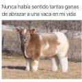 Simplemente quiero abrazar a esta vaca