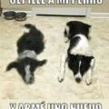 Como tener mas de un perro