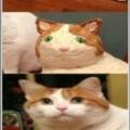 Cuando el pastel en honor a tu gato no queda como querias