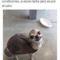 La tortuga que ladra