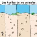 Las huellas que dejan los animales