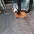 Los gatos ya no nos necesitan