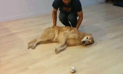 Cuando tu perro es un vago