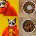Logica de gatos