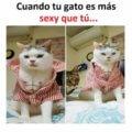 Cuando tu gato es mas sexy que tu