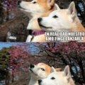 Los sueños de tu perro