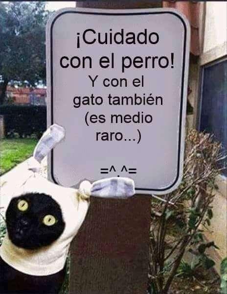 Cuidado con el gato