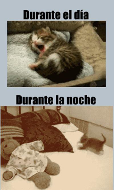 El dia vs la noche